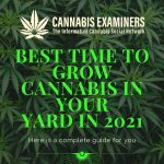 Best time to grow cannabis in your yard in 2021
