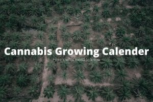 Cannabis Calendar for growth-cannabisexaminer.com