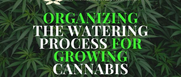 Here's how to organize watering process for growing cannabis-cannabisexaminer.com